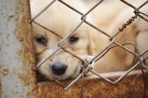 Stop Ohio Puppy Mills